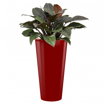 Runner Säule mit Philodendron imperial red